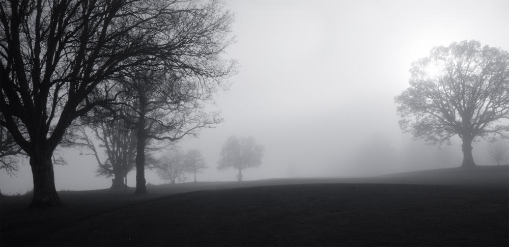 Trees 2/2