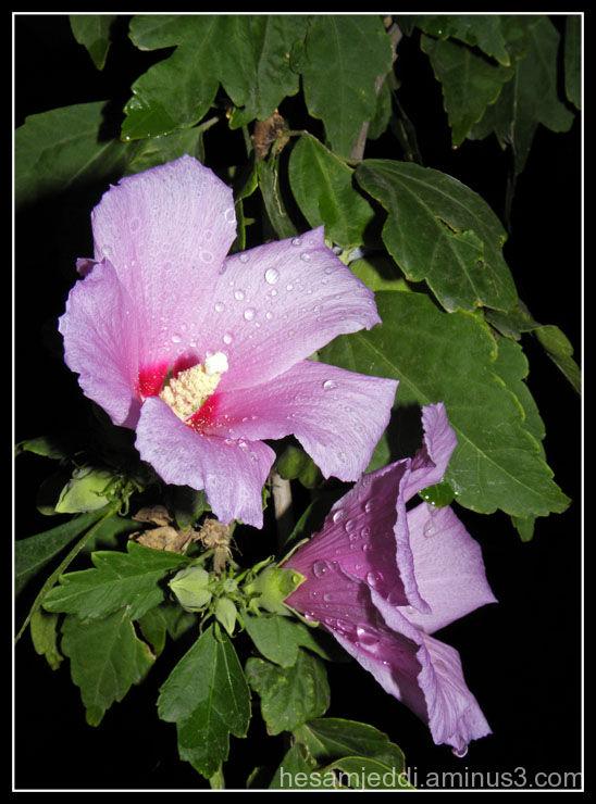 flower in night