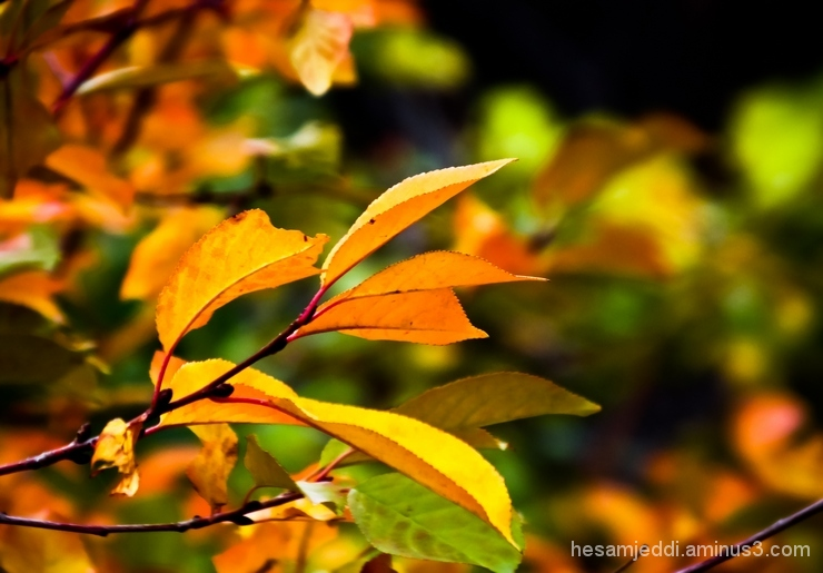 i'm autumn