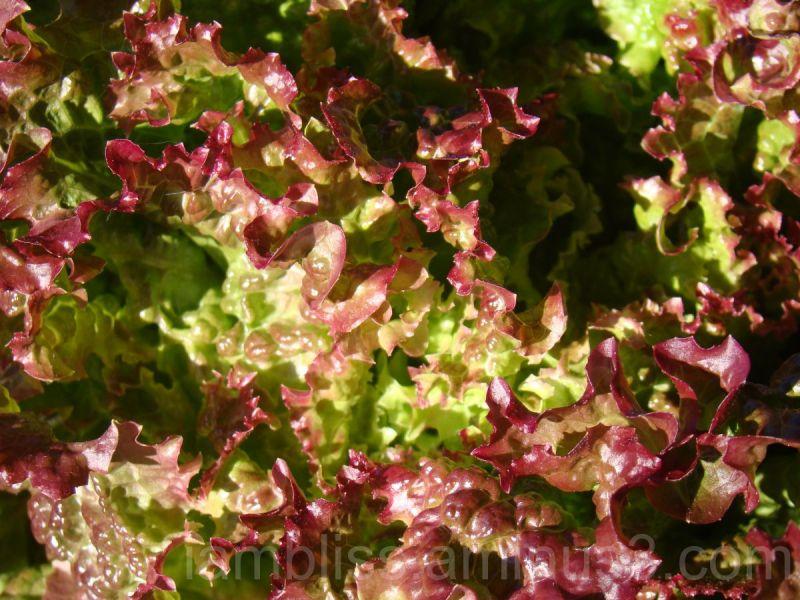 Salad...yummy