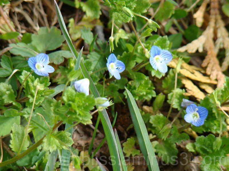 Around the corner, little blue ones