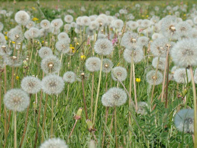 Field of lightness