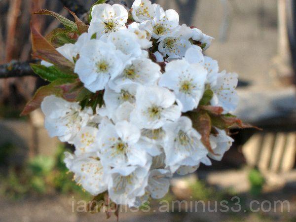 lttle bouquet