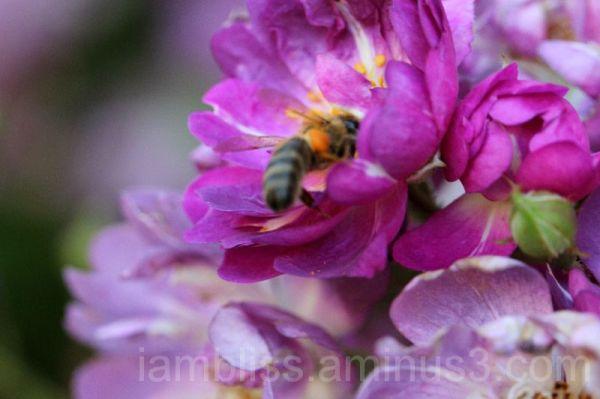 So much pollen on my legs