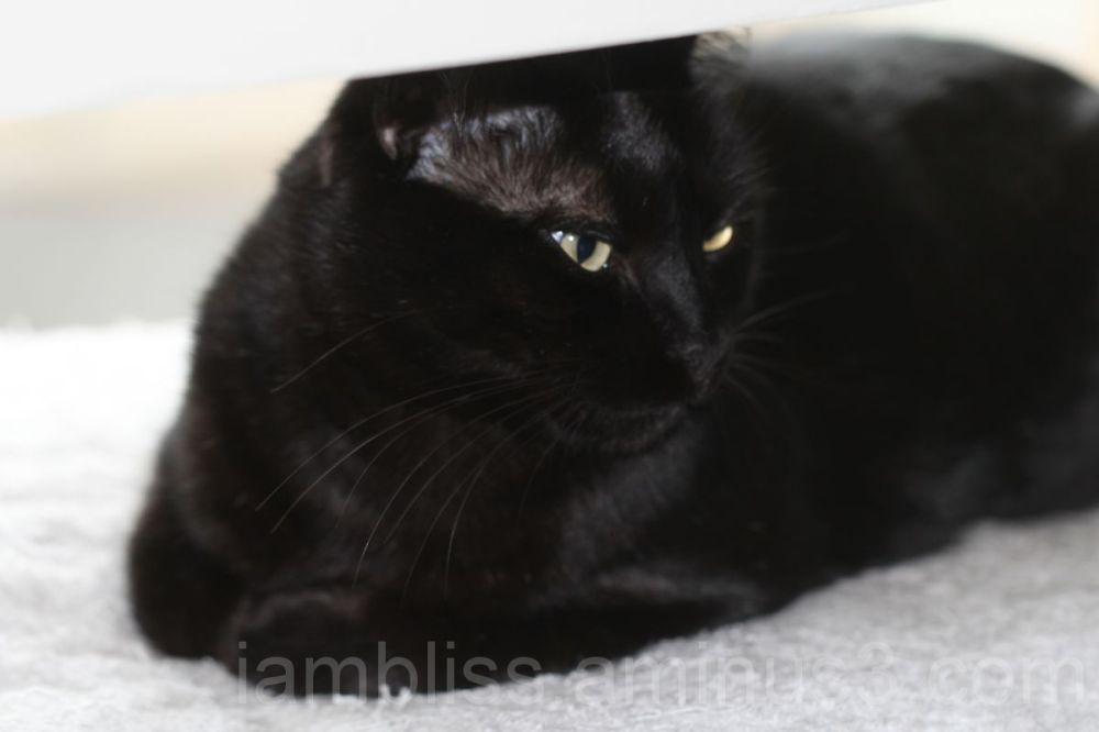 No... i am not sharing this cushion
