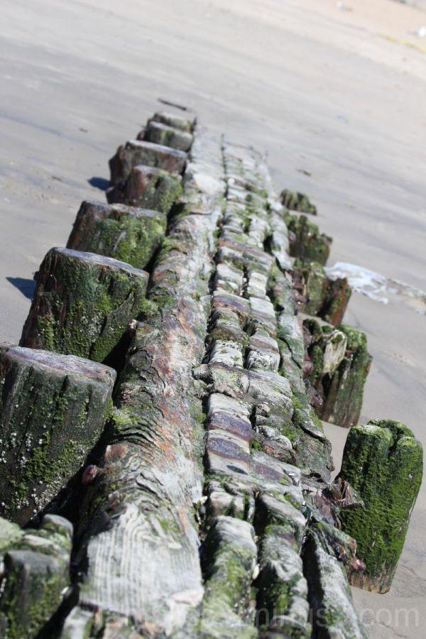 Towards the sea