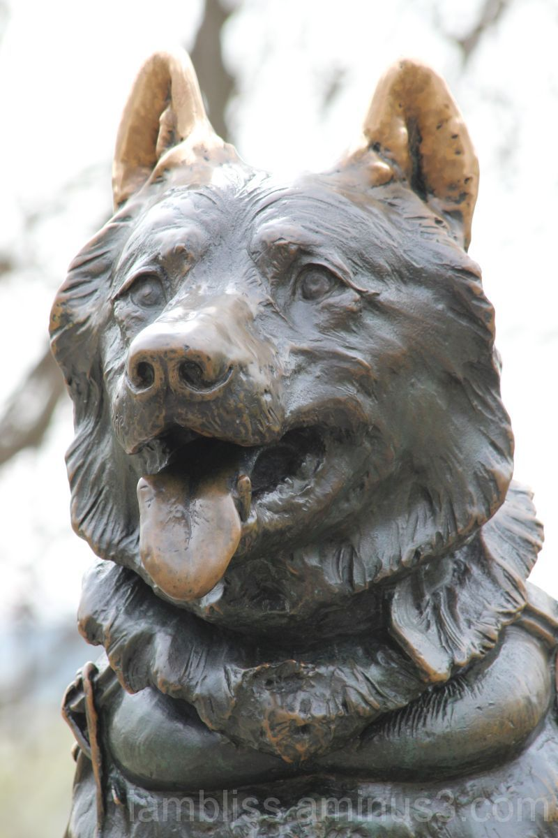 Sled dog statue - Central Park