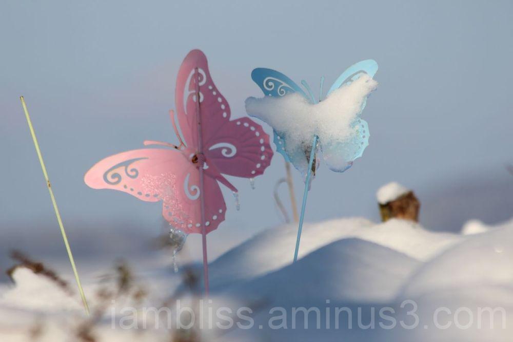 Butterflies in the snow