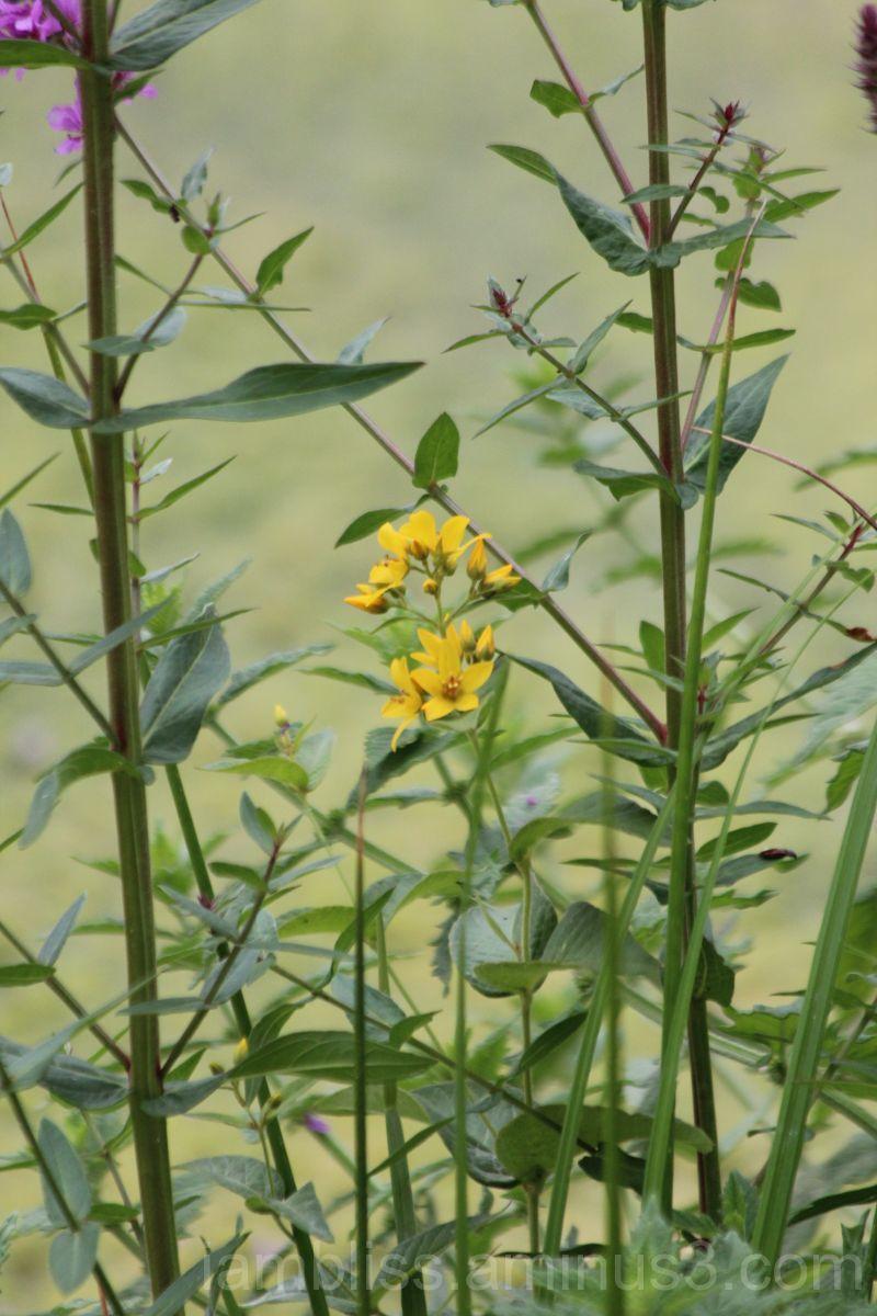 Dash of yellow