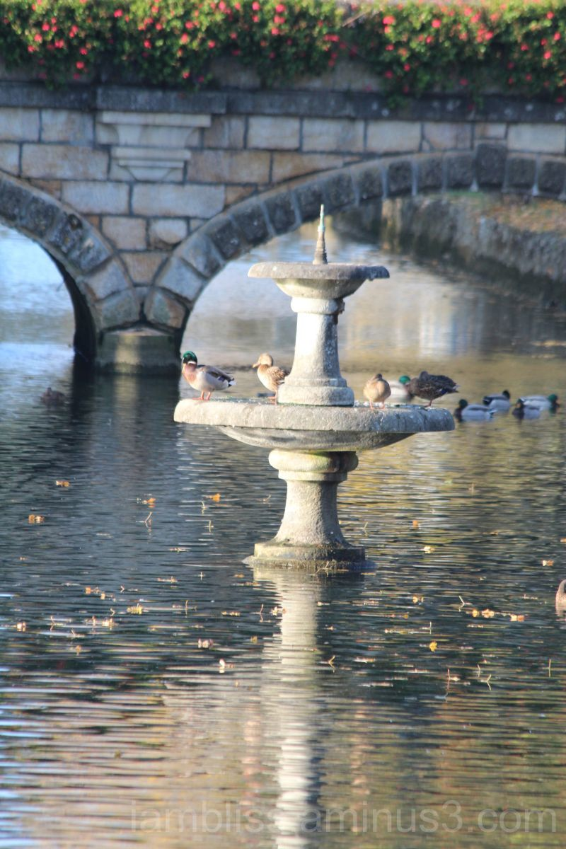 A fountain in the river