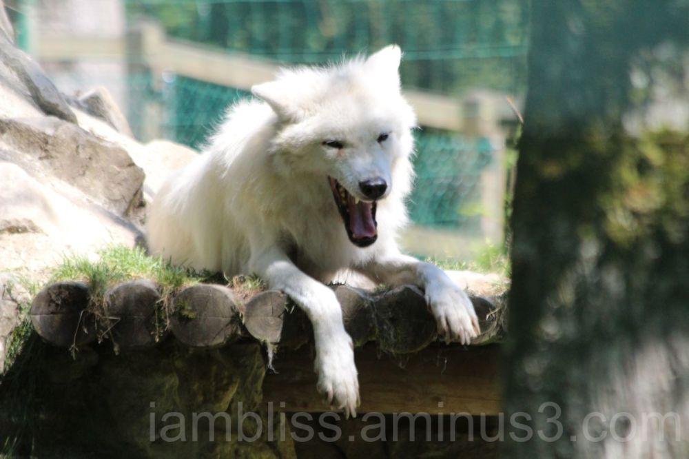 Just yawning