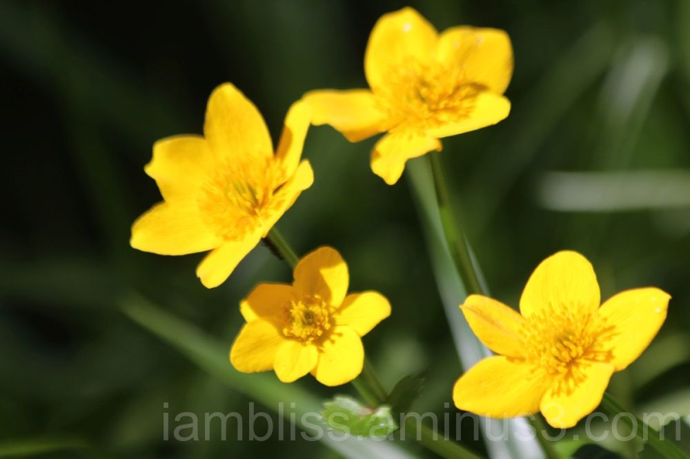 A dash of yellow