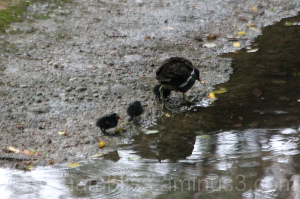 Three little ones