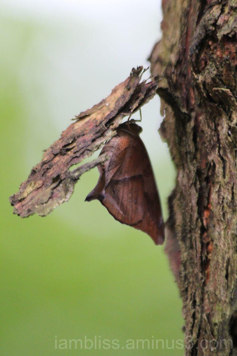 Under a piece of bark