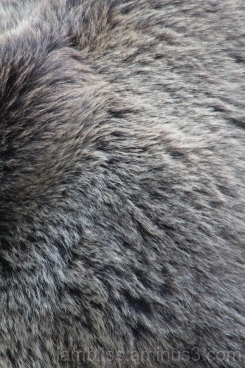 Bear fur