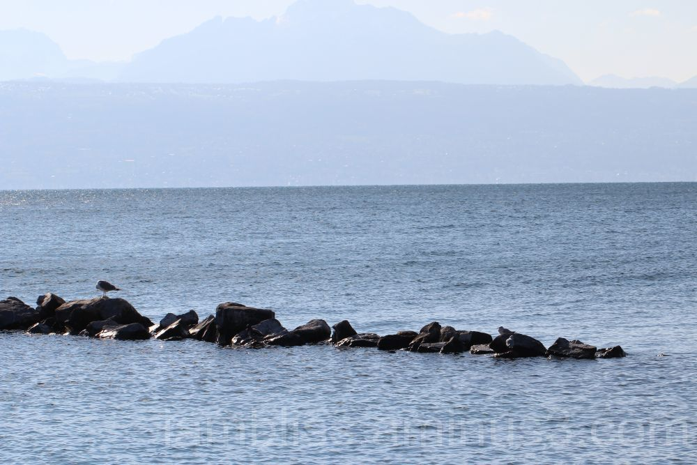 Alone on a rock