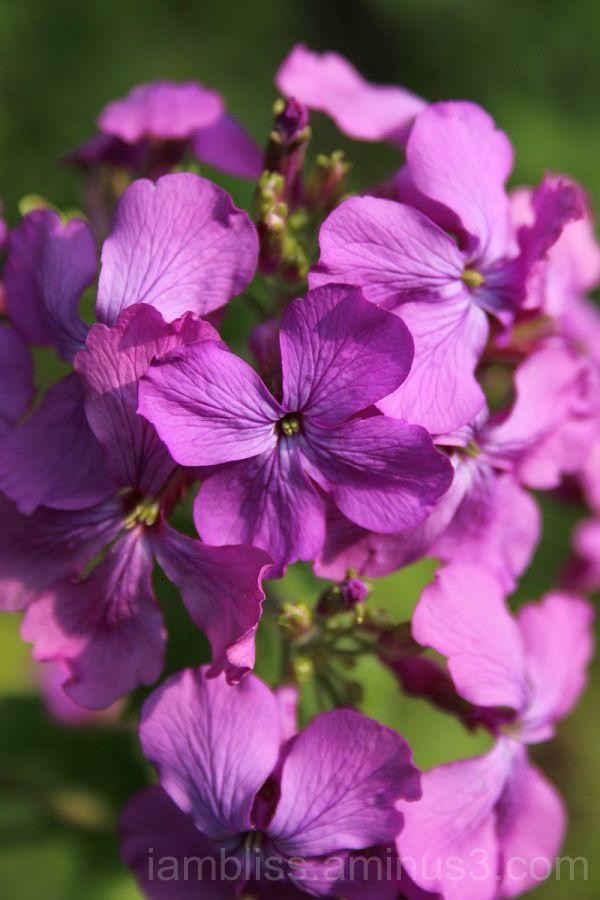 A dash of purple