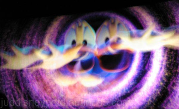 Disney, Jud, Magic Kingdom, Donald Duck, Philharma