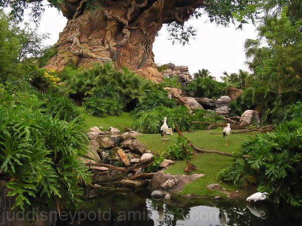 Jud, Disney, Animal Kingdom, Tree of Life