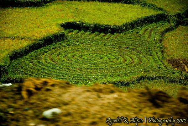 Road to Sagada (Rice Fields 1)