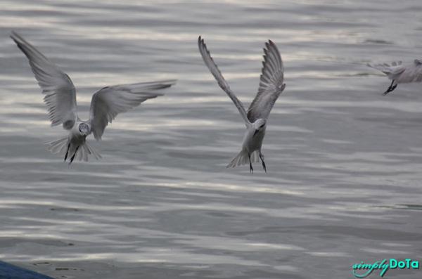 Dancing Birds