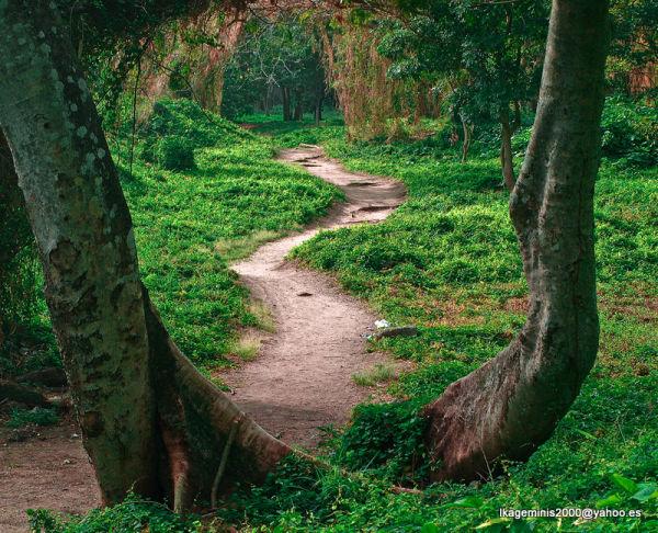 Bosque de la Habana, Cuba