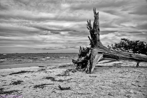 Lighthouse Beach - Sanibel Island ... florida