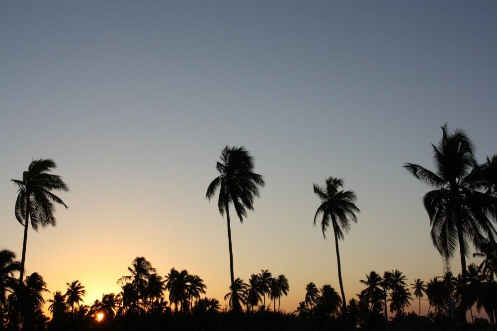 Palmtrees in a sunset on Zanzibar (Tanzania)
