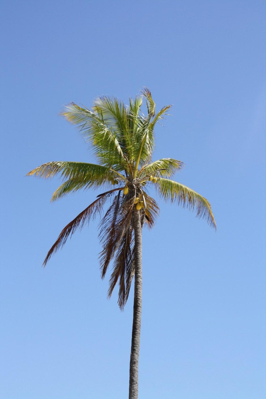 Single palmtree on Zanzibar Island