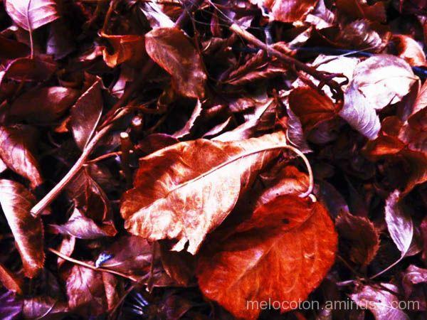......luz de otoño