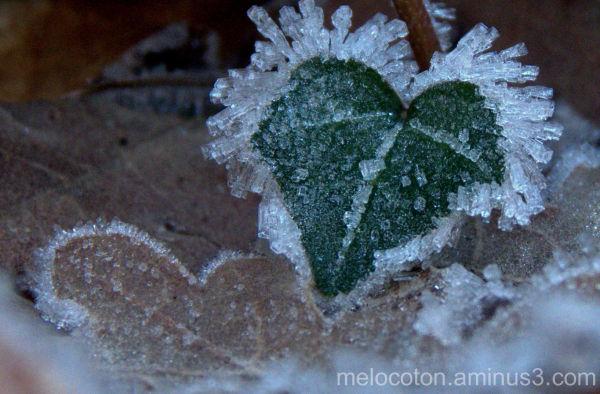 Corazón de invierno