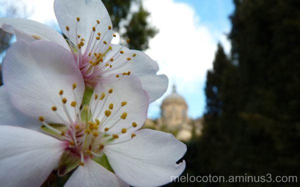 La Catedral y el Almendro