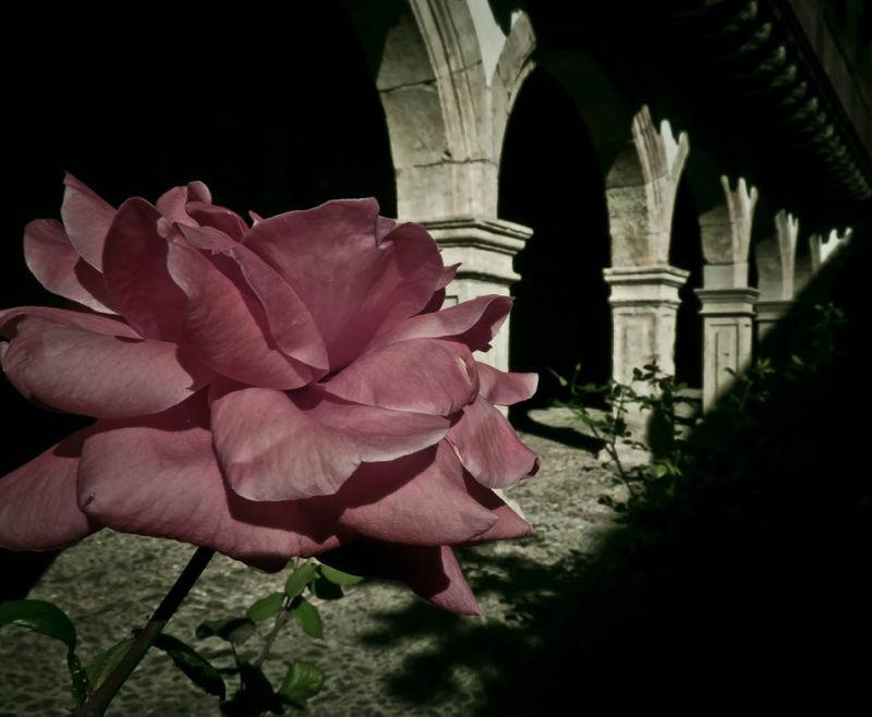 Rosa, Rosae, ( Claustro de las Dueñas, Salamanca)