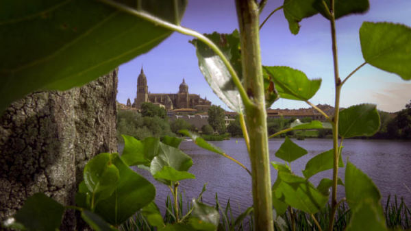 Catedral de Salamanca, 4