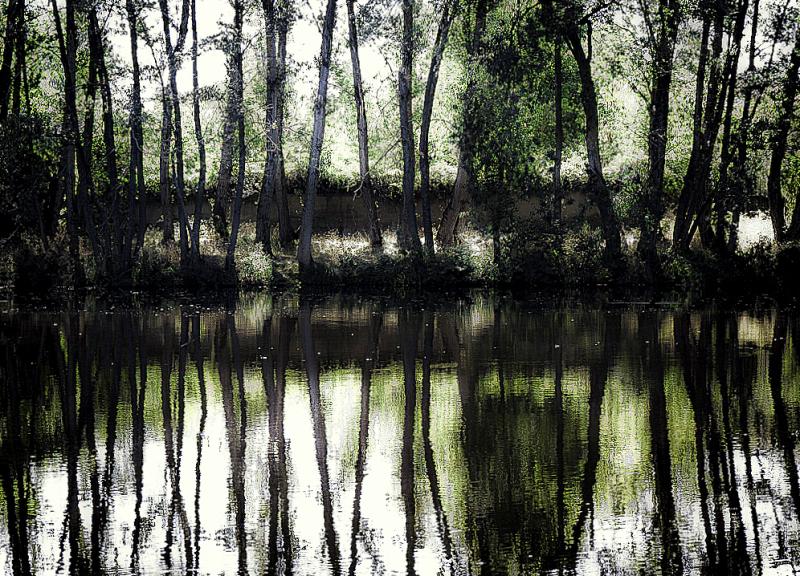 Espejo del bosque