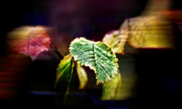 El color del viento