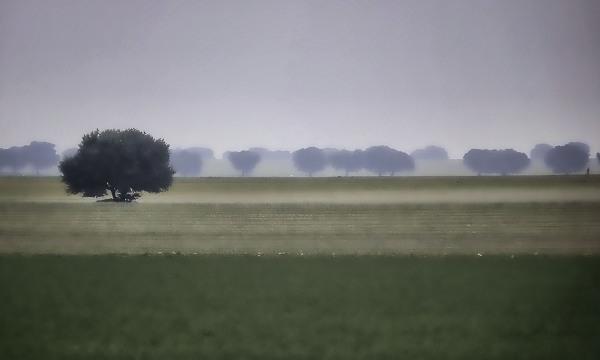 Campos de niebla I ,(Salamanca)
