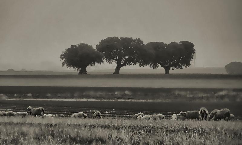 Campos de niebla II ,(Salamanca)