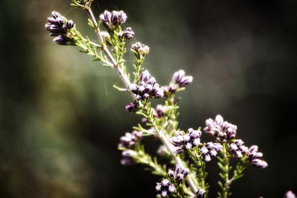 Aromas de la sierra