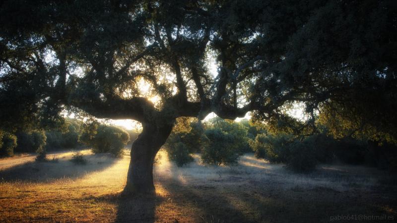 Al alba de mi tierra II