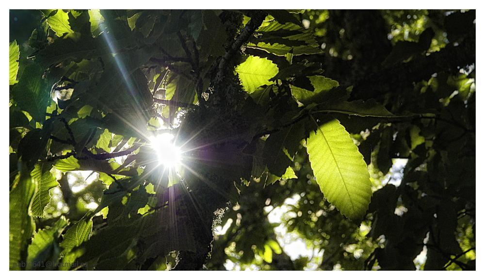 Luz viva