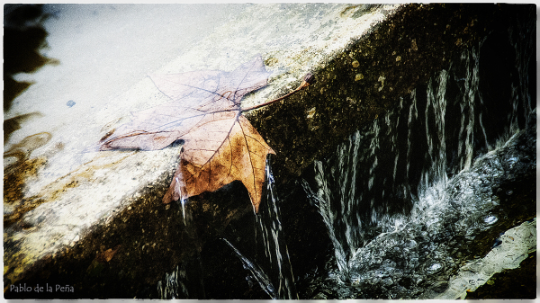 leaf and water