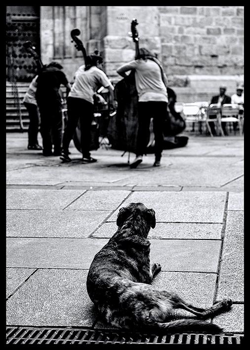 Dog & Music