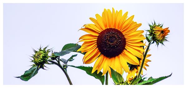 vegetal sun
