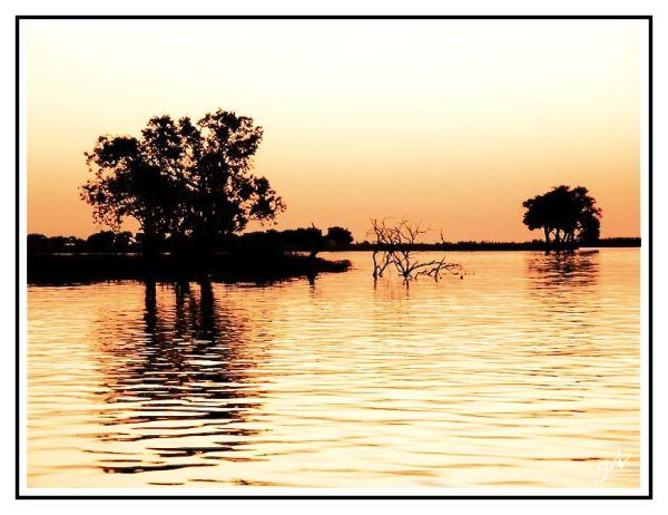 Le soleil se lève sur Chobe
