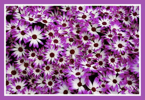 Un monde en couleurs - Violet