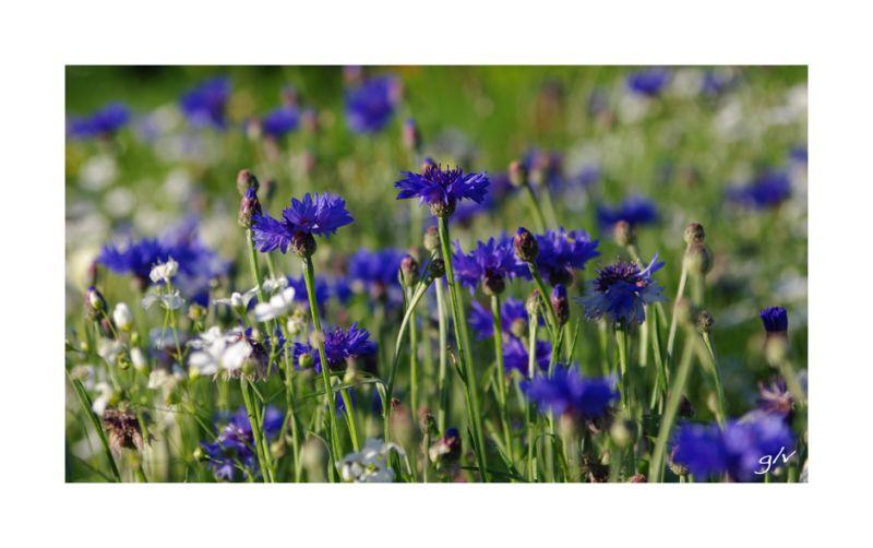 Un monde en couleurs - Bleu IV