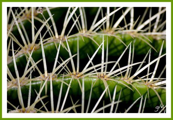 C comme Cactus