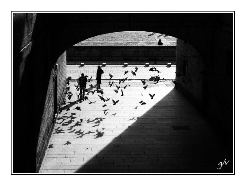Contrejour & Silhouette - III