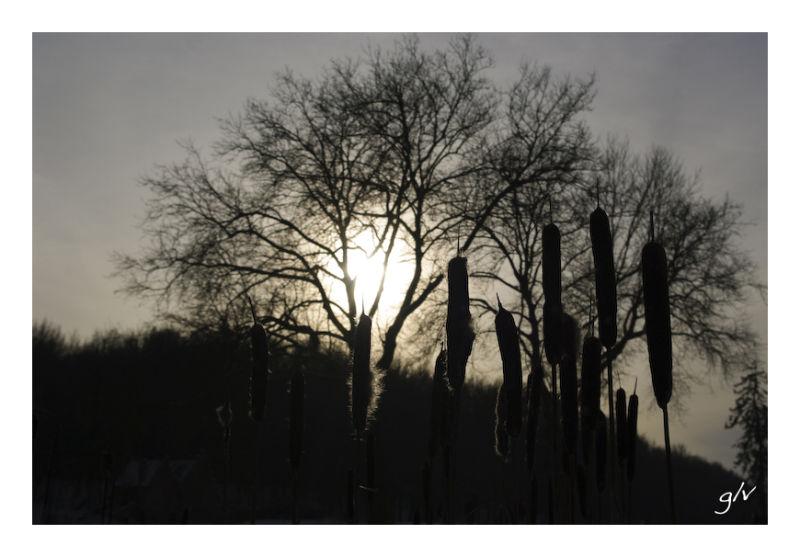 Contrejour & Silhouette - XIII